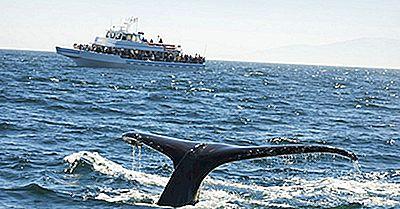 Principales Destinos De Observación De Ballenas En El Mundo