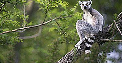 O Que É Mais Famoso Em Madagascar?