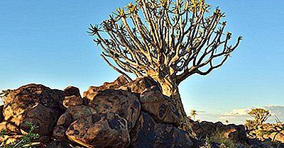 10 Especies De Árboles En Peligro De Extinción
