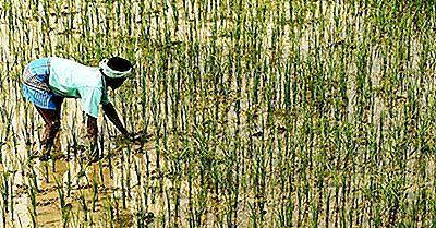 10 Største Risproducerende Lande