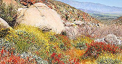 Die 36 Nationalen Natürlichen Sehenswürdigkeiten Von Kalifornien