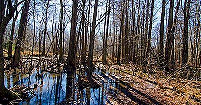 De 6 Nationella Naturliga Landmärken I Maryland