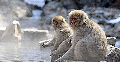 Animali Nativi In Giappone