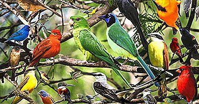Les Oiseaux Sont-Ils Des Mammifères?