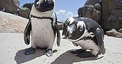 Les Pingouins Sont-Ils Des Oiseaux?