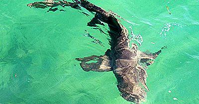 ¿Hay Tiburones En El Mar Mediterráneo?