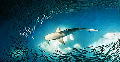 Kan Haier Svømme Bakover?