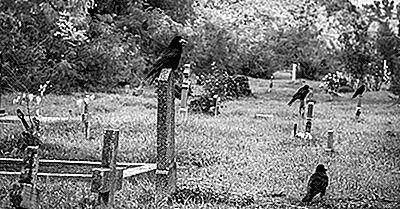¿Sabías Que Los Cuervos Tienen Funerales El Uno Para El Otro?
