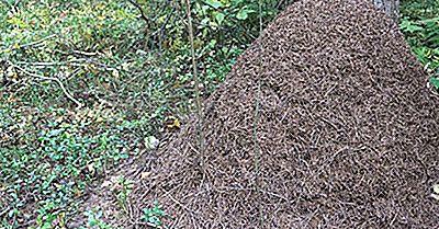 ¿Las Hormigas Hibernan? ¿A Dónde Van Las Hormigas En Invierno?