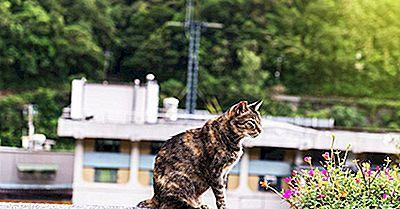 Houtong Cat Village - Unika Platser Runt Om I Världen