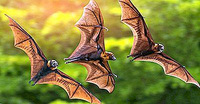 Quanti Pipistrelli Ci Sono Nel Mondo?