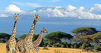 Como Alto É Uma Girafa?