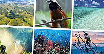 Interessante Fakta Om Papua Ny Guinea