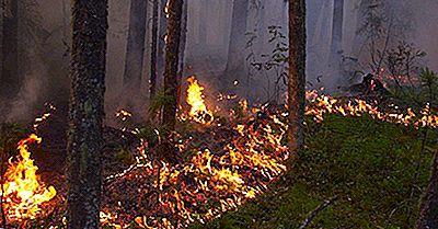 Le Plus Grand Pinceau Et Les Incendies De Forêt Dans L'Histoire Enregistrée