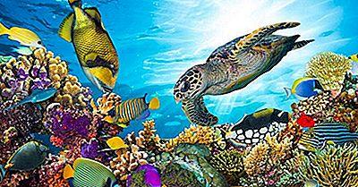 Die Längsten Korallenriffe Der Welt