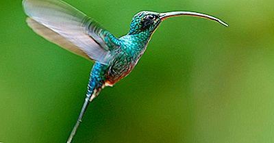 O Único Pássaro Que Pode Voar Para Trás