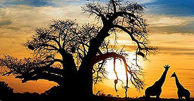 Specii De Copaci Baobab