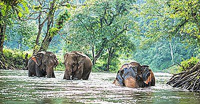 Thailand-Tiere - Tiere, Die In Thailand Leben