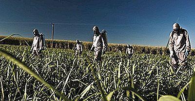 Top Sukkerrørsproducerende Lande