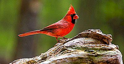 Aves De Los Estados Unidos
