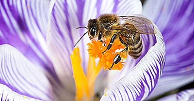 Wir Staat Schmetterlinge Und Insekten