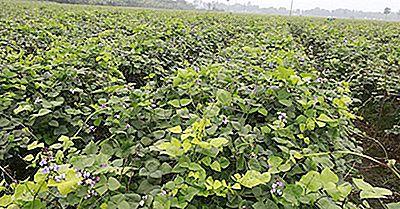 ¿Cuáles Son Los Principales Recursos Naturales De Bangladesh?