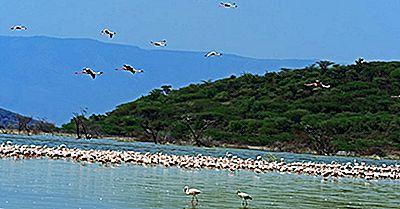 Hvad Er Rift Valley Lakes?