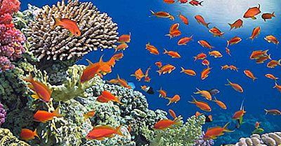 Was Ist Ein Korallenriff?