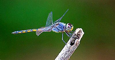 ¿Qué Es Odonata?