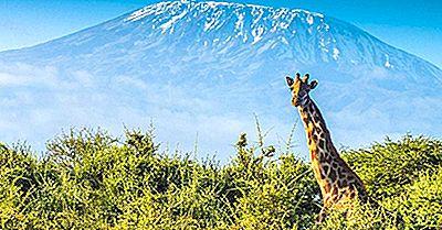 Chi È L'Animale Più Alto Del Mondo?